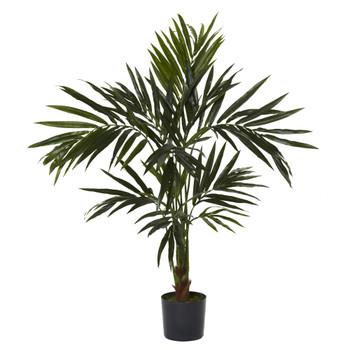 5 Kentia Silk Tree - SKU #5340