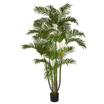 5 Areca Silk Tree - SKU #5344
