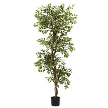 6 Variegated Ficus Tree - SKU #5345
