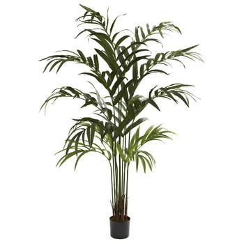 6 Kentia Palm Tree - SKU #5356