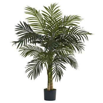 4 Golden Cane Palm Tree - SKU #5357