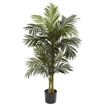 5 Golden Cane Palm Tree x 2 w/18 Lvs - SKU #5358