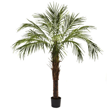 6 Robellini Palm Tree - SKU #5366