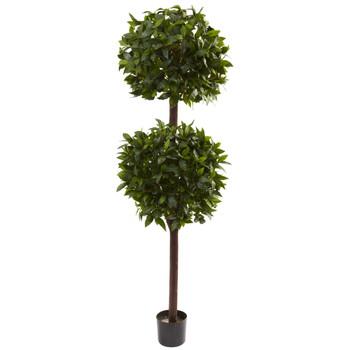 6 Sweet Bay Double Ball Topiary - SKU #5398