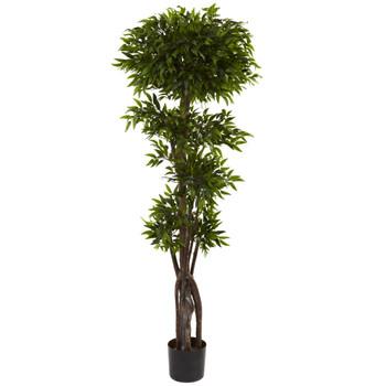 5 Ruscus Tree - SKU #5400