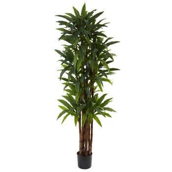6.5 Dracaena Tree - SKU #5403