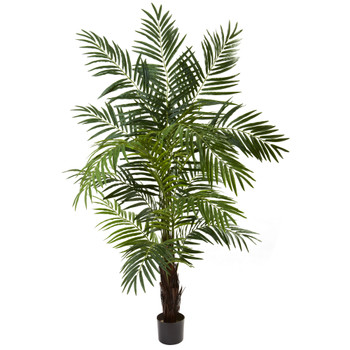 6 Areca Palm Tree - SKU #5408