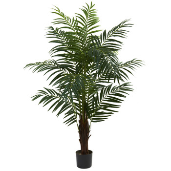 5 Areca Palm Tree - SKU #5416