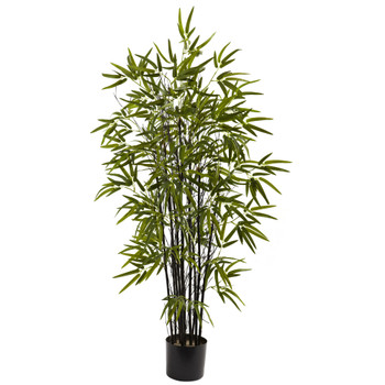 4 Black Bamboo Tree - SKU #5417
