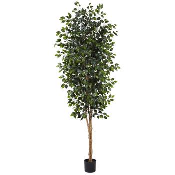 8 Ficus Tree w/1512 Lvs - SKU #5427