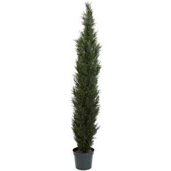 7 Mini Cedar Pine Tree w/3614 Tips in 12 Pot Two Tone Green - SKU #5429