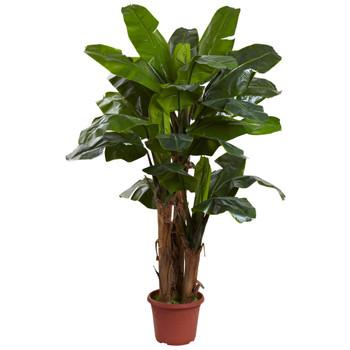 7 Giant Triple Stalk Banana Tree UV Resistant Indoor/Outdoor - SKU #5434