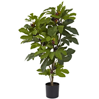 32 Fig Tree w/42 Lvs 15 Figs - SKU #5440