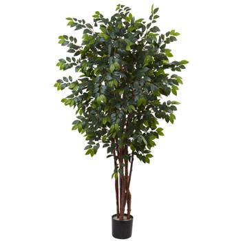 7 Sakaki Silk Tree - SKU #5452