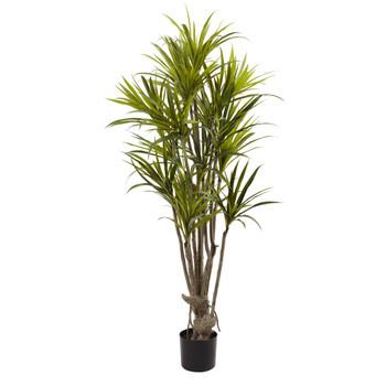 5 Dracaena Silk Tree - SKU #5466