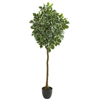 6 Variegated Aralia Artificial Tree - SKU #5549