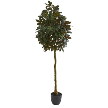 75 Capensia Ficus Artificial Tree - SKU #5558