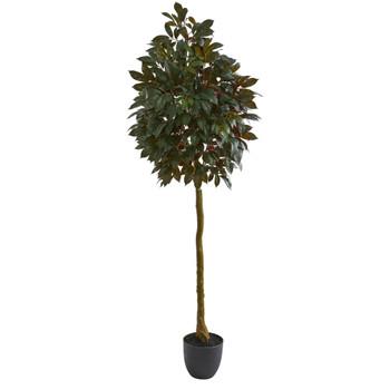 75 Capensia Ficus Artificial Tree - SKU #5558