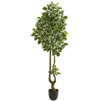 6.5 Variegated Aralia Artificial Tree - SKU #5560