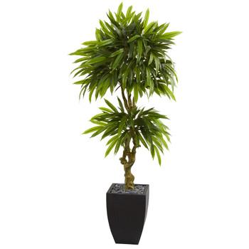 5.5 Mango Artificial Tree in Black Wash Planter UV Resistant Indoor/Outdoor - SKU #5723