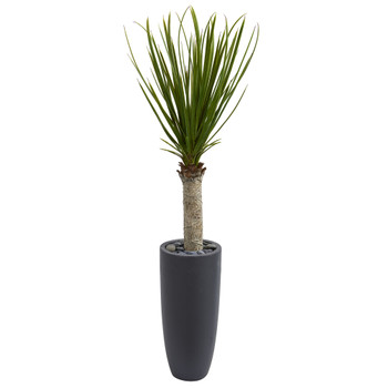 4 Yucca Tree in Gray Cylinder Planter - SKU #5798