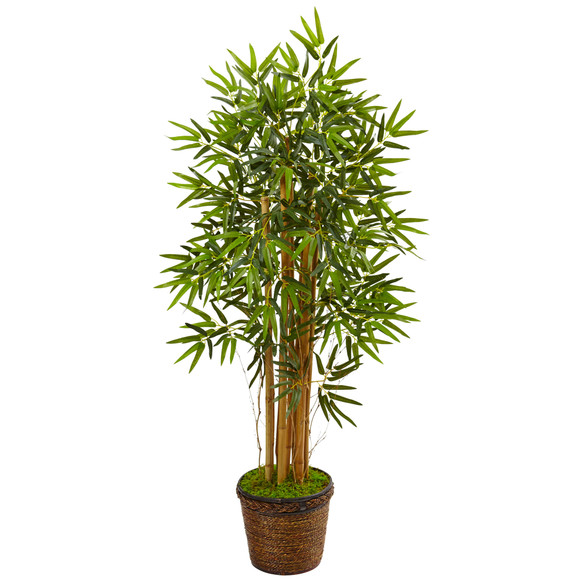 4.5 Bamboo Tree in Coiled Rope Planter - SKU #5826