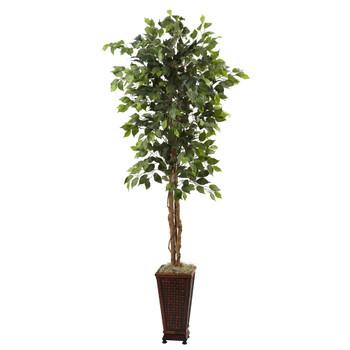 6.5 Ficus w/Decorative Planter - SKU #5925