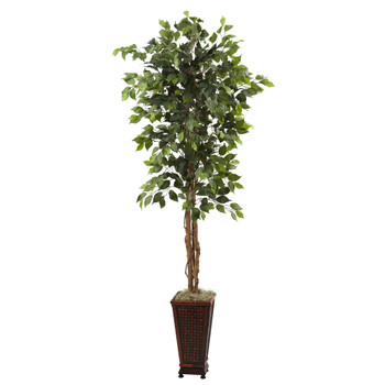 6.5 Ficus w/Decorative Planter - SKU #5925