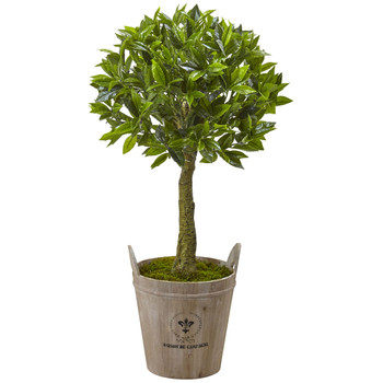 Sweet Bay Topiary with Farmhouse Planter - SKU #5951
