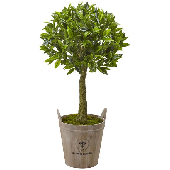Sweet Bay Topiary with Farmhouse Planter - SKU #5951