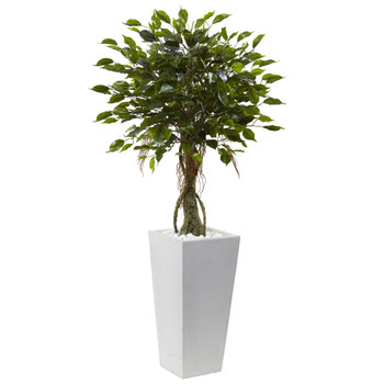 Ficus Tree with White Planter UV Resistant Indoor/Outdoor - SKU #5952