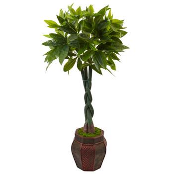 4.5 Money Tree in Planter - SKU #5969