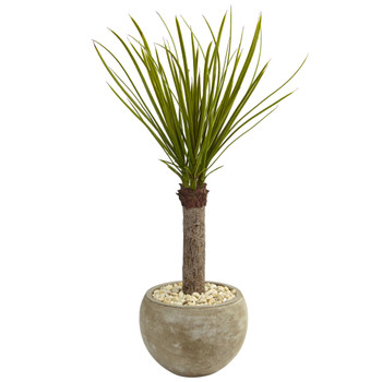 3.5 Yucca Tree in Sand Colored Bowl - SKU #5974
