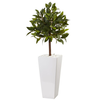 3 Sweet Bay Tree in White Tower Planter - SKU #5979