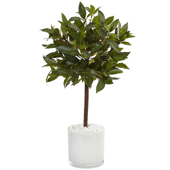 2 Sweet Bay Tree in White Glossy Cylinder - SKU #5980