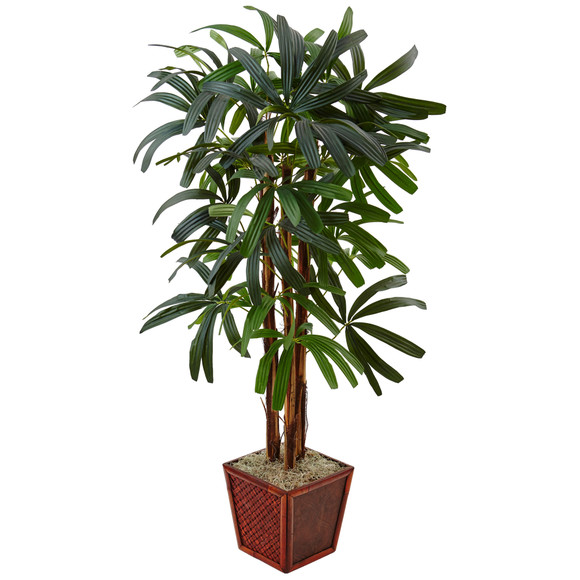 5 Raphis Palm Tree in Bamboo Planter - SKU #5983