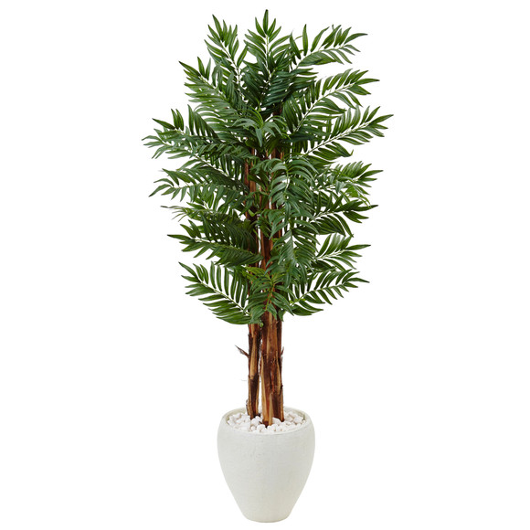 5 Parlor Palm Tree in White Oval Planter - SKU #5987
