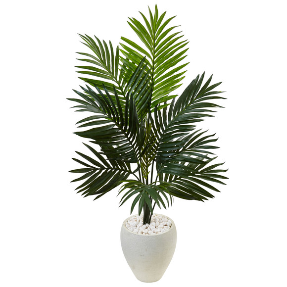 4.5 Kentia Palm Tree in White Oval Planter - SKU #5988