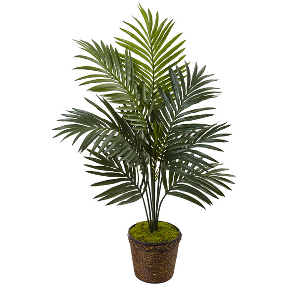 4 Kentia Palm Tree in Coiled Rope Planter - SKU #5993