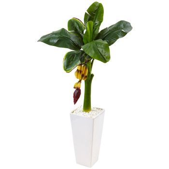 3.5 Banana Tree in White Tower Vase - SKU #5997