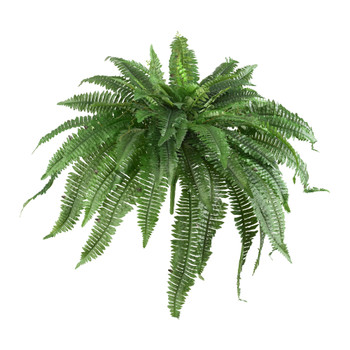 48 Boston Fern Set of 2 - SKU #6051-S2