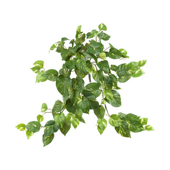 30 Pothos Hanging Bush Set of 3 - SKU #6059-S3