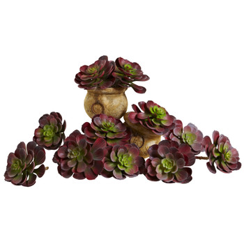 6 Echeveria Succulent Set of 12 - SKU #6105-S12