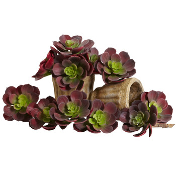 6 Echeveria Succulent Set of 12 - SKU #6106-S12