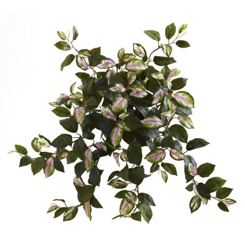 21 Hoya Hanging Bush Set of 4 - SKU #6117-S4