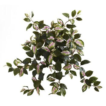 21 Hoya Hanging Bush Set of 4 - SKU #6117-S4