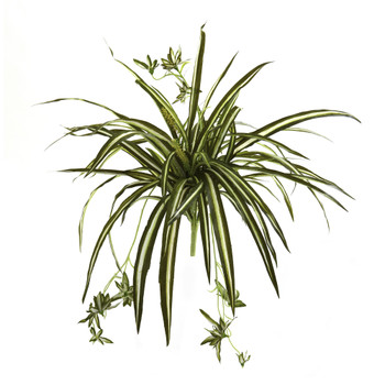 23 Spider Plant Bush Set of 4 - SKU #6118-S4