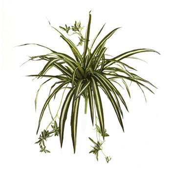 23 Spider Plant Bush Set of 4 - SKU #6118-S4
