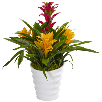Bromeliad in White Swirl Vase - SKU #6304
