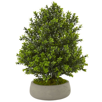 Boxwood Plant in Stone Planter Indoor/Outdoor - SKU #6312